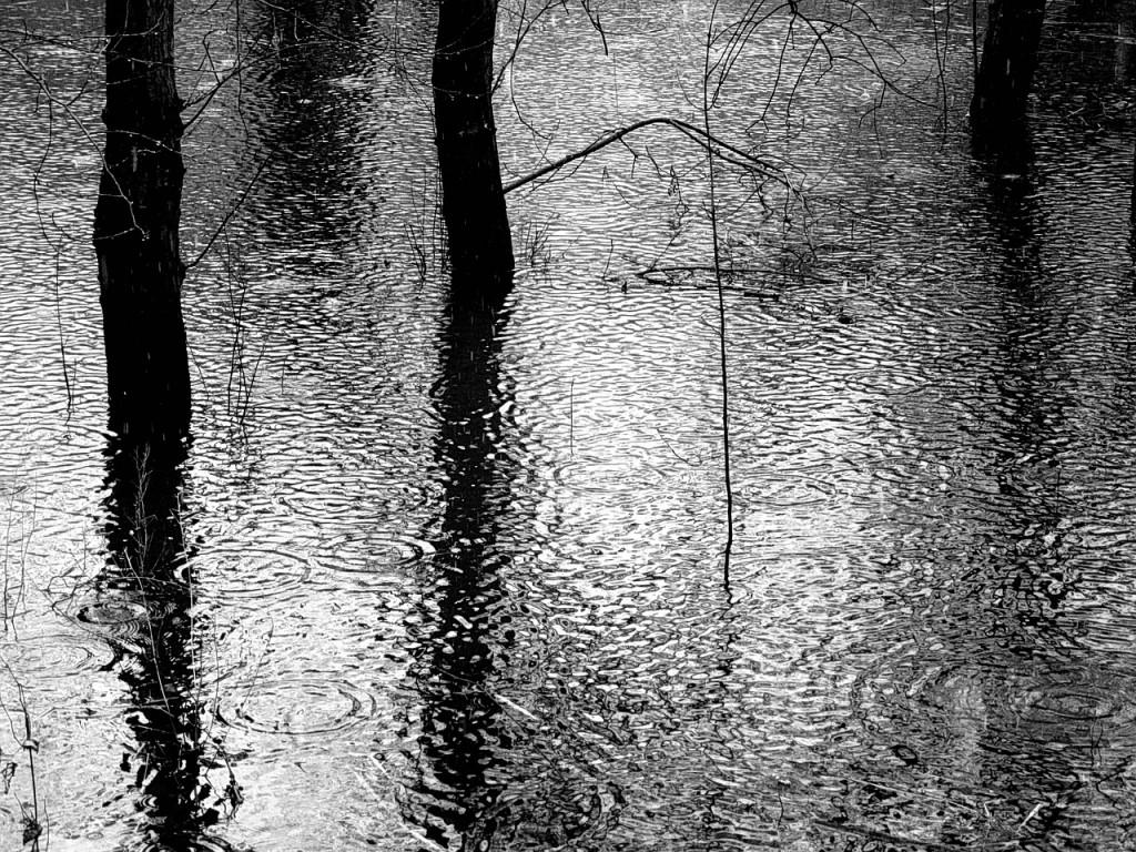 rain-178040_1280