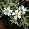 white-flowers-366866_1280