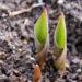 mulch grow humanity plant