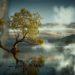 noticing quiet mind lone tree nature