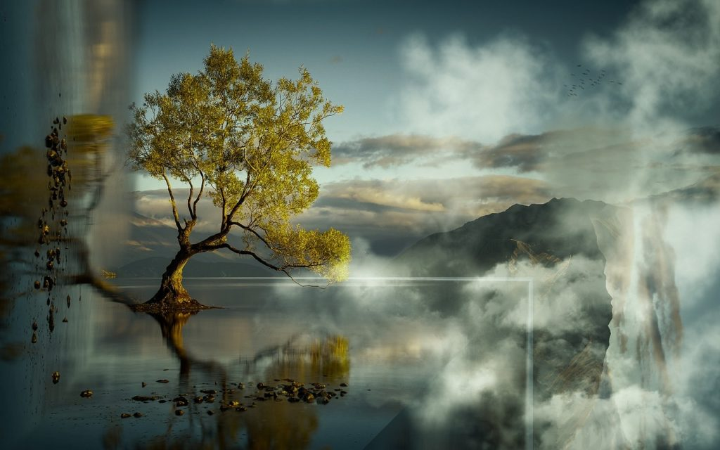 noticing quiet mind lone tree nature