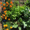 Garden cropped