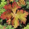 autumn-940968_1280