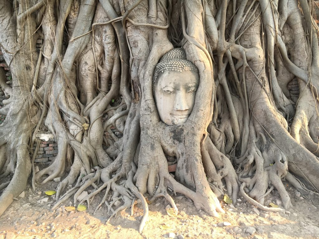 self, roots, attachment
