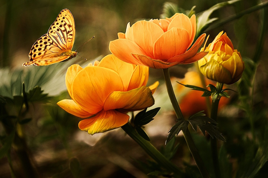 flowers butterfly everything treasure