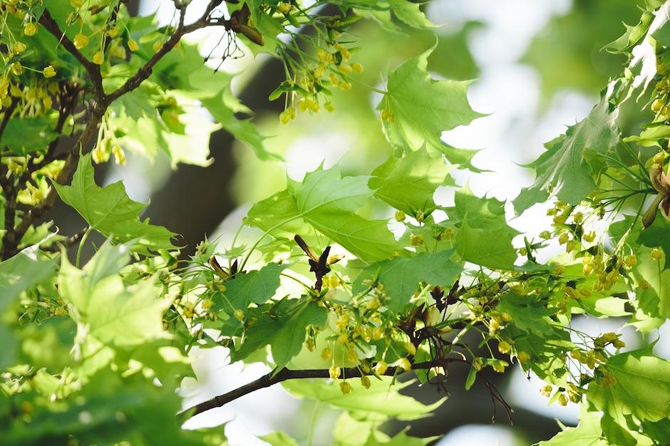 awaken leaf tree