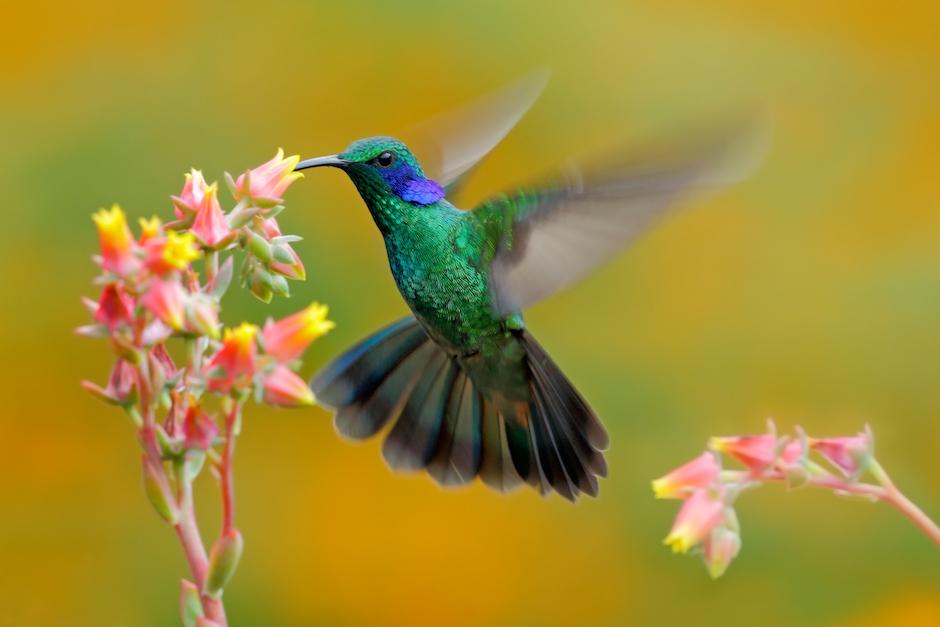 hummingbird this moment