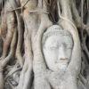 buddha suffering