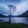 Lonesome Tree all phenomena teaching dharma