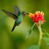 hummingbird present moment awareness
