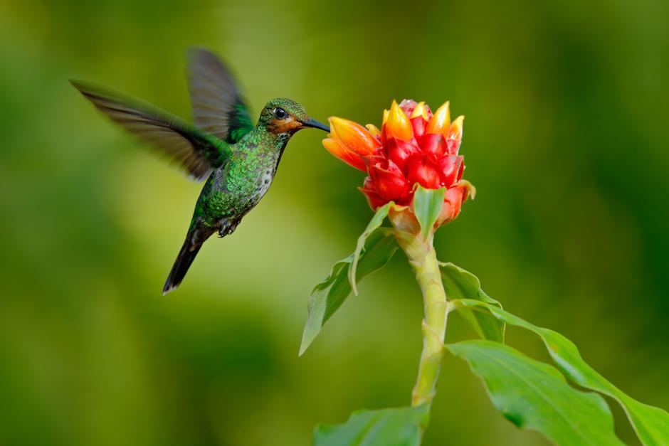 hummingbird present moment awareness